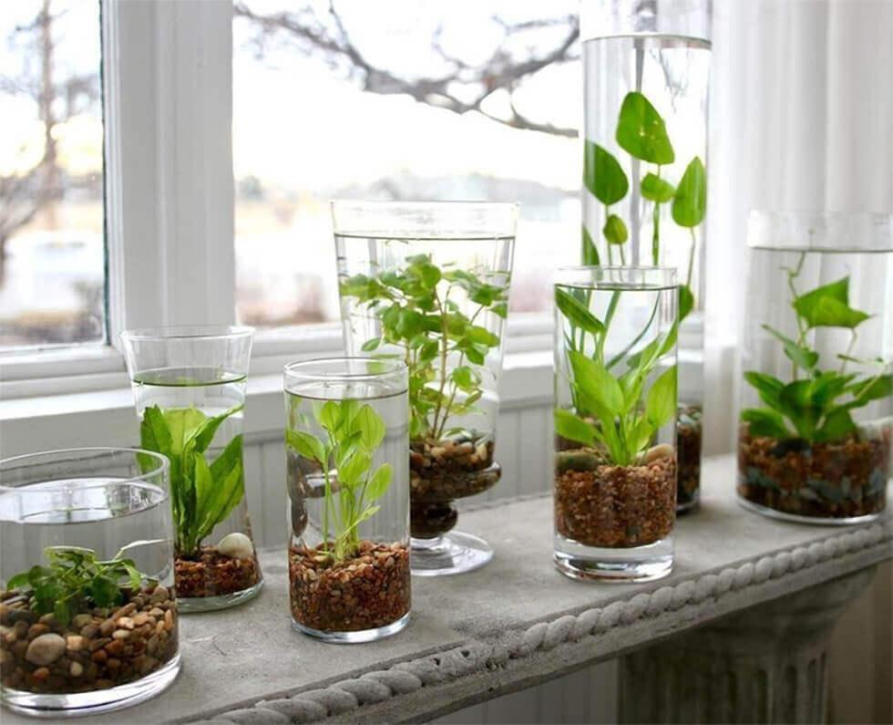 Glass vases used as water gardens.