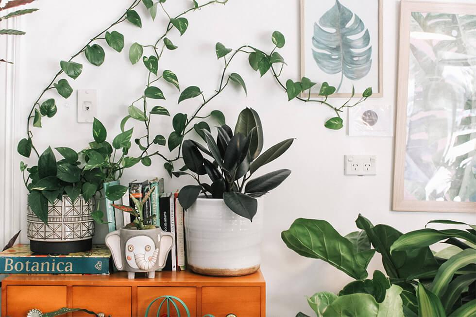 A variety of trailing and potted indoor plants in ceramic planters in a mindful living space.