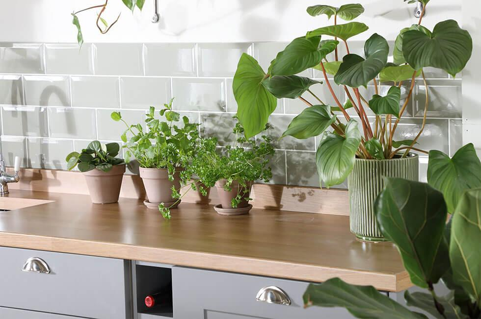 Lots of plants in an airy light grey kitchen