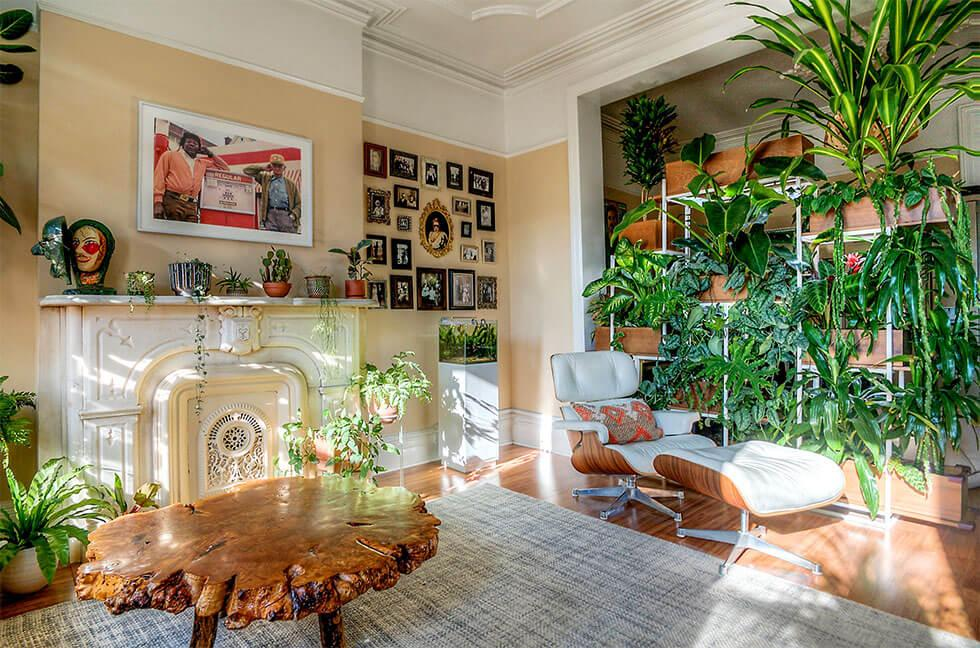 Boho inspired living room filled with many types of plants
