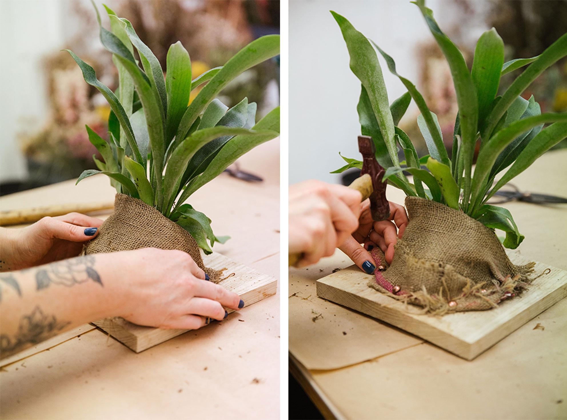 Wrap hessian fabric around the plant then use upholstery nails to fasten it