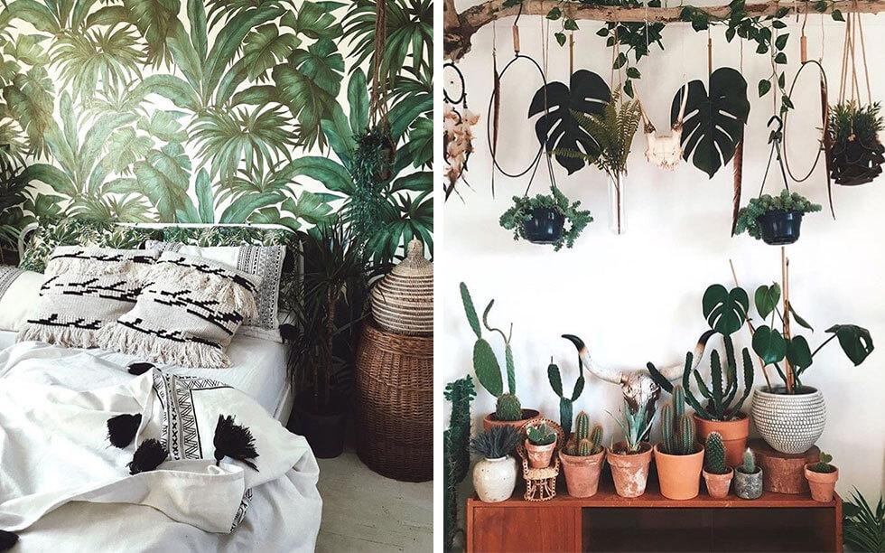 A collage of interiors with indoor plants.