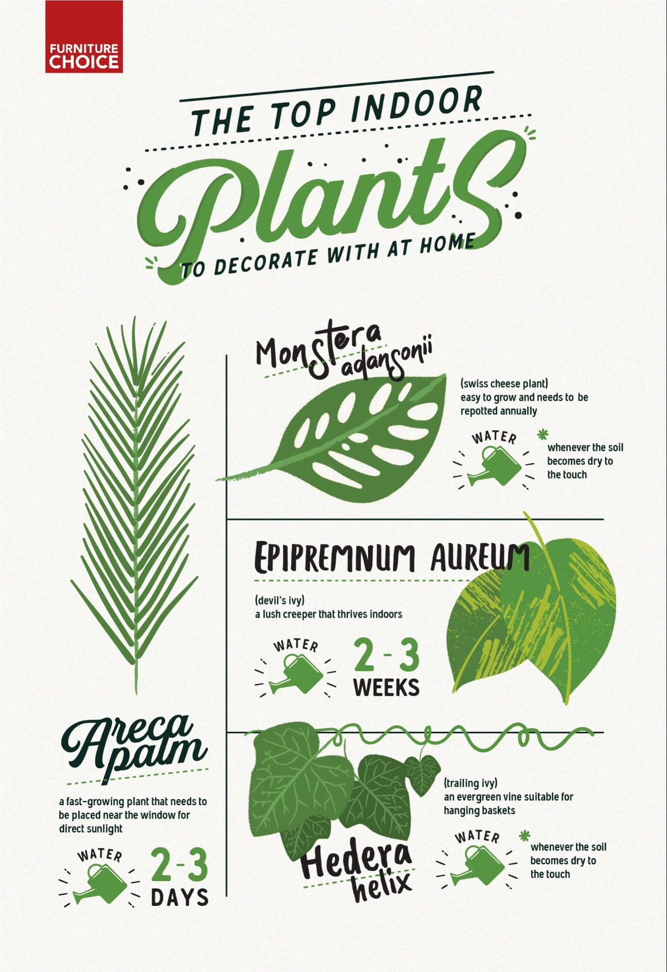 Infographic of top indoor plants at home