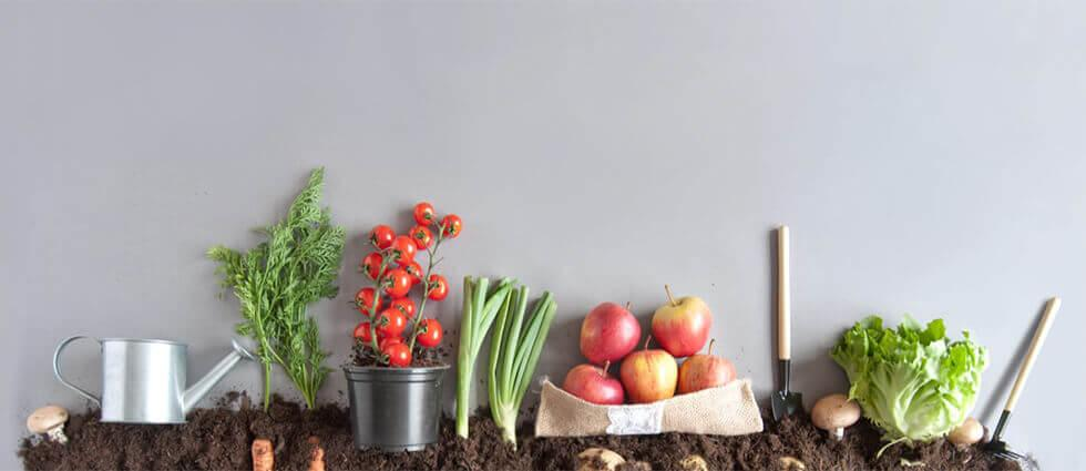 Vegetables that can be grown indoors include tomatoes, chives, and lettuce.
