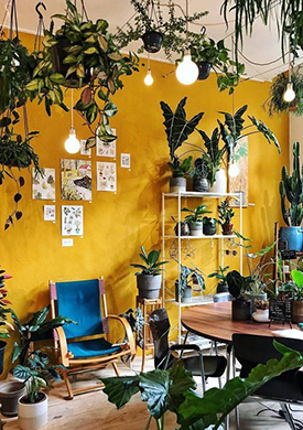 Mustard yellow walls in a living room filled with plants