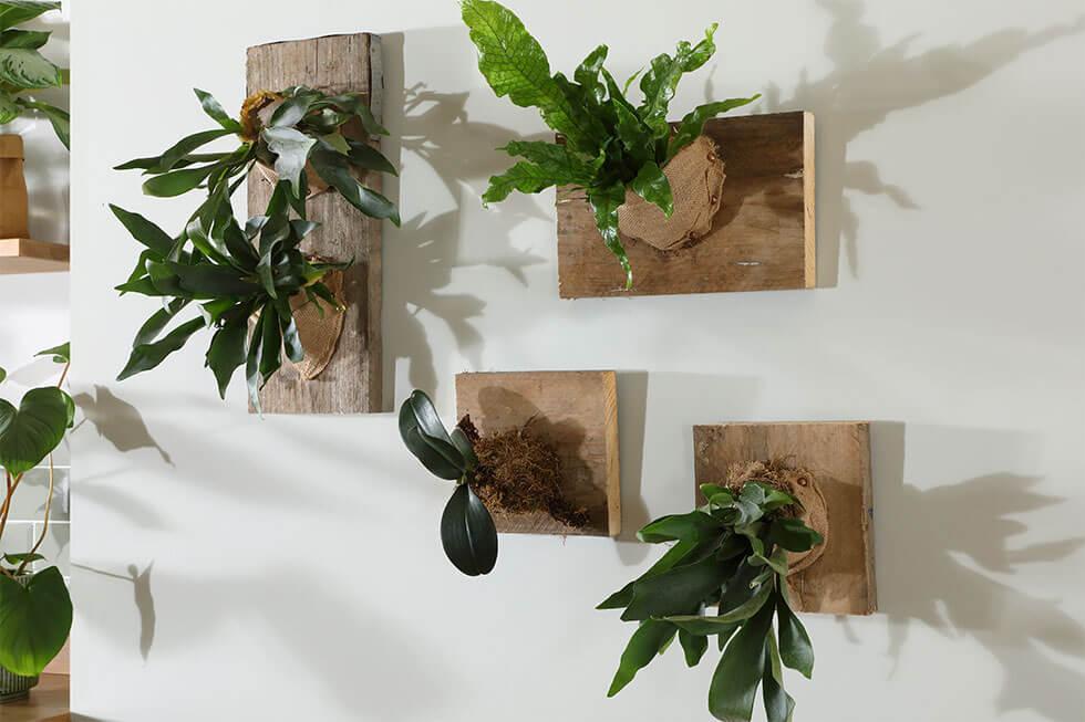DIY Staghorn fern wall decor in an eco-friendly home