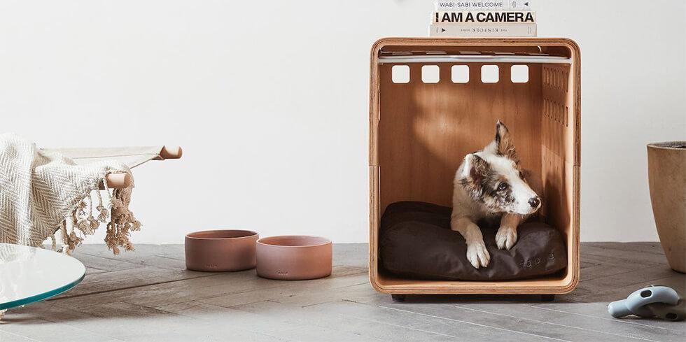 Cute dog in a stylish dog crate