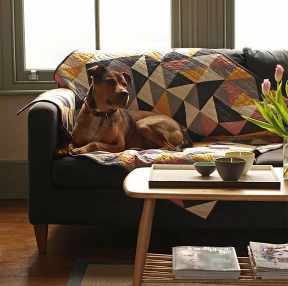 Dog sitting on a sofa with a dog-friendly throw