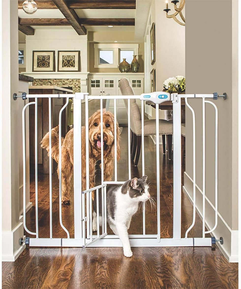 Cat and dog in front of a small gate in the kitchen.