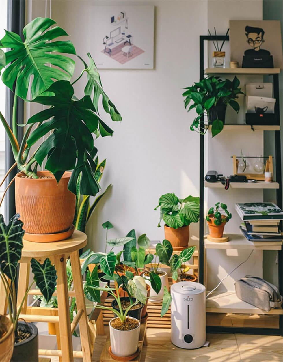 Indoor plants in a living room