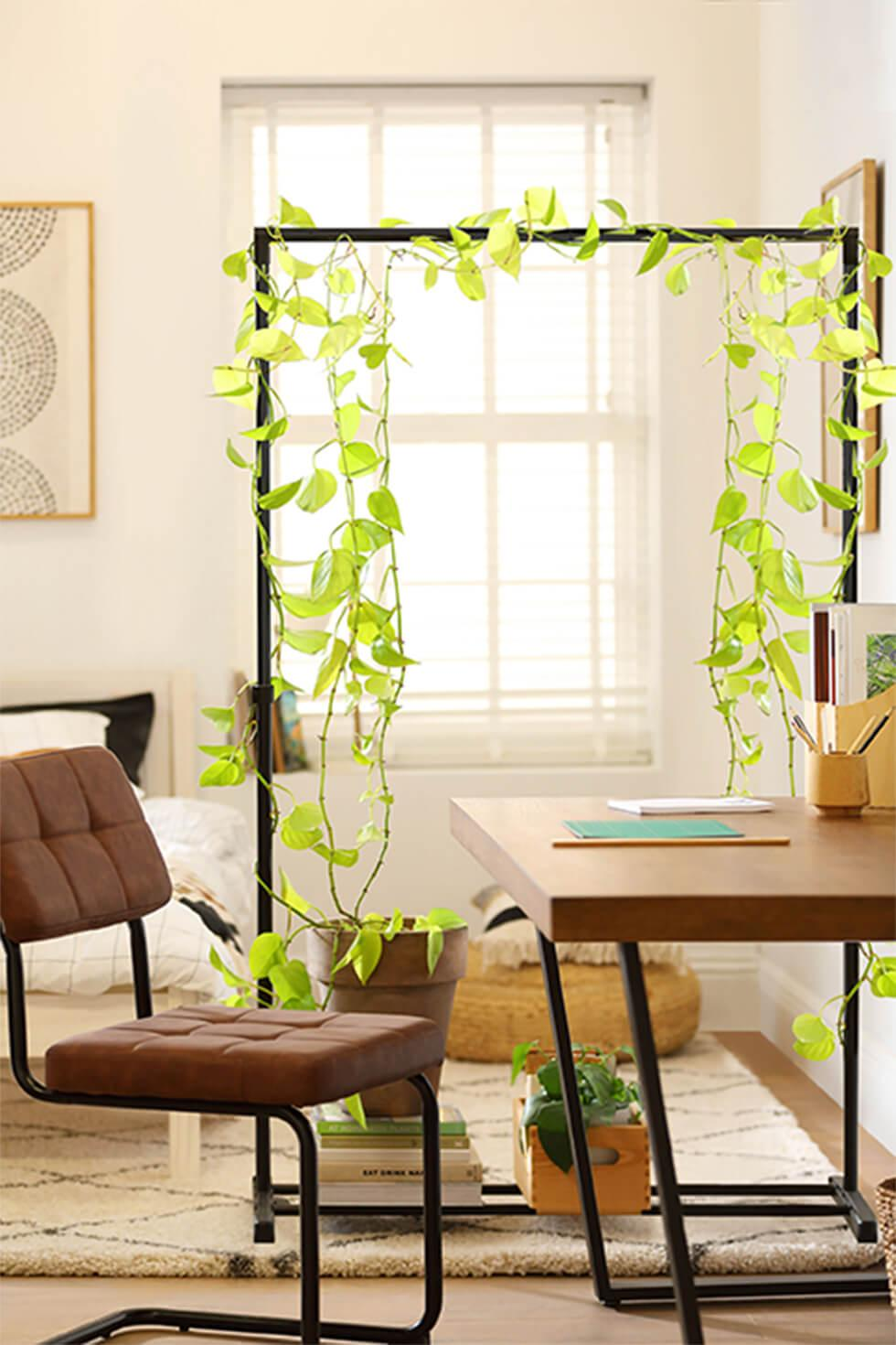Hang the trailing plants first