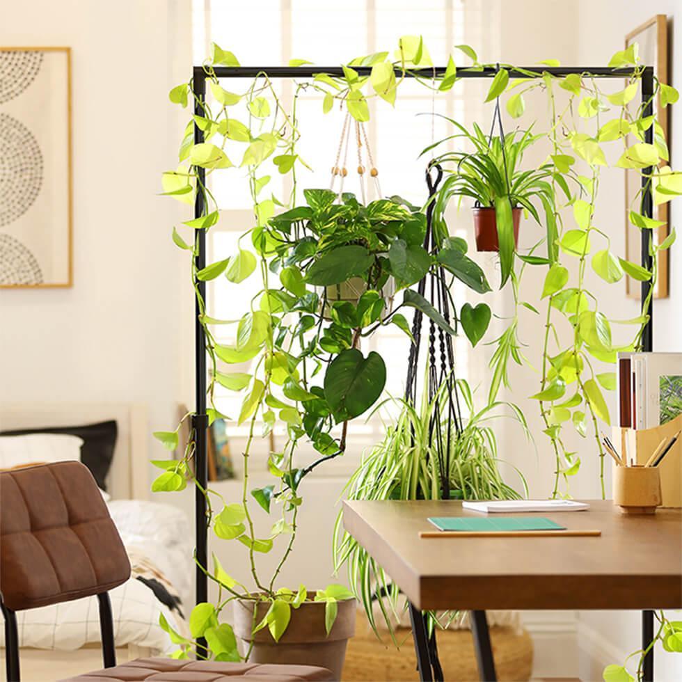 Final plant room divider image