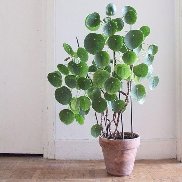 Potted plants with round green leaves
