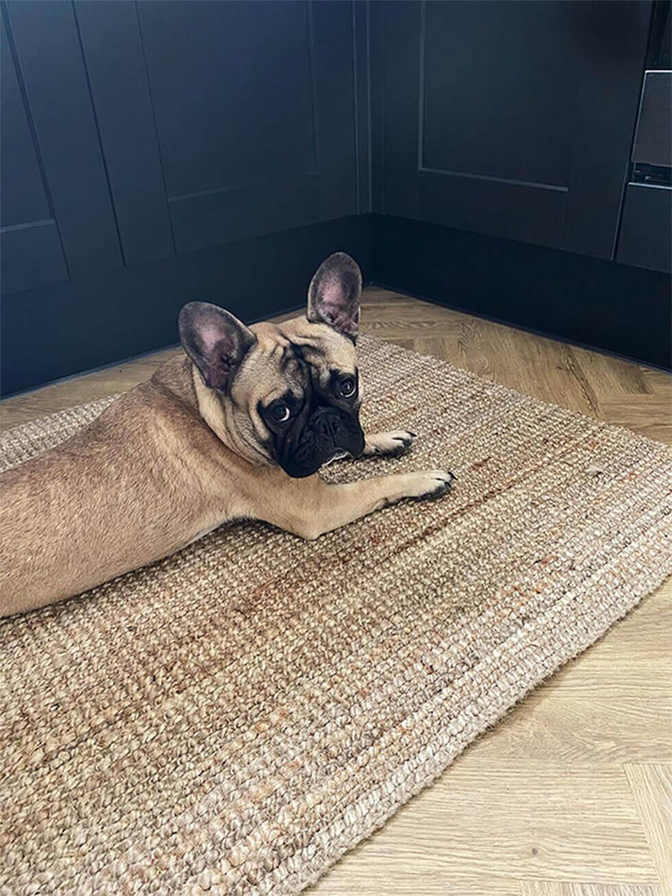 French bulldog relaxing on a rug