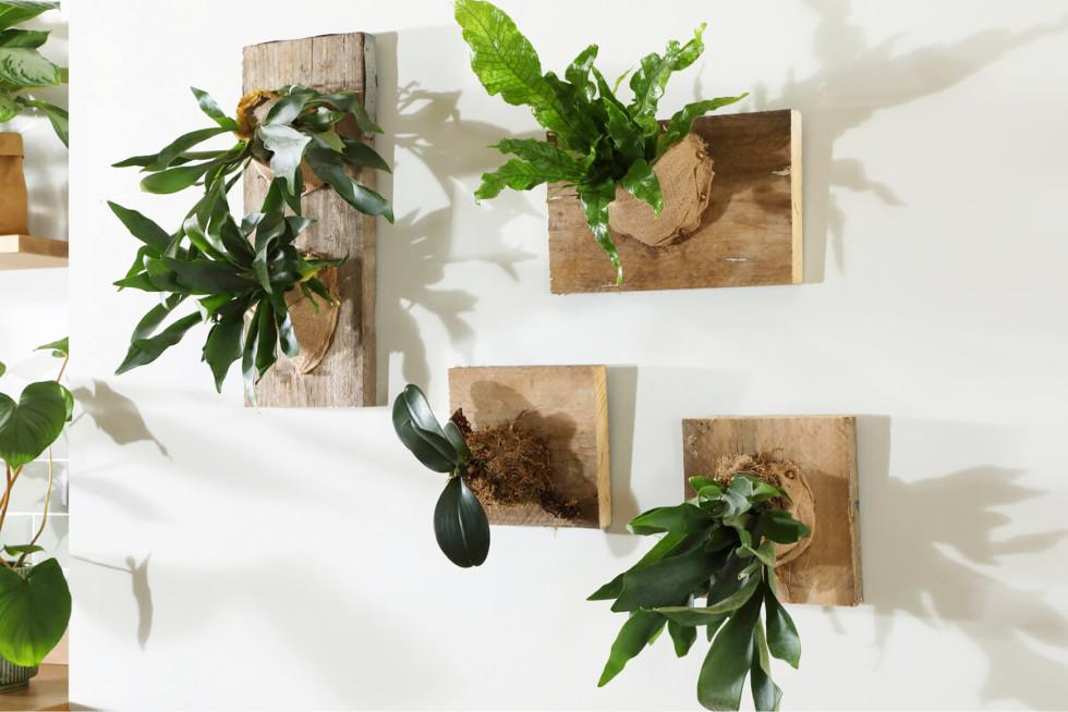 DIY: How to create a staghorn fern living wall