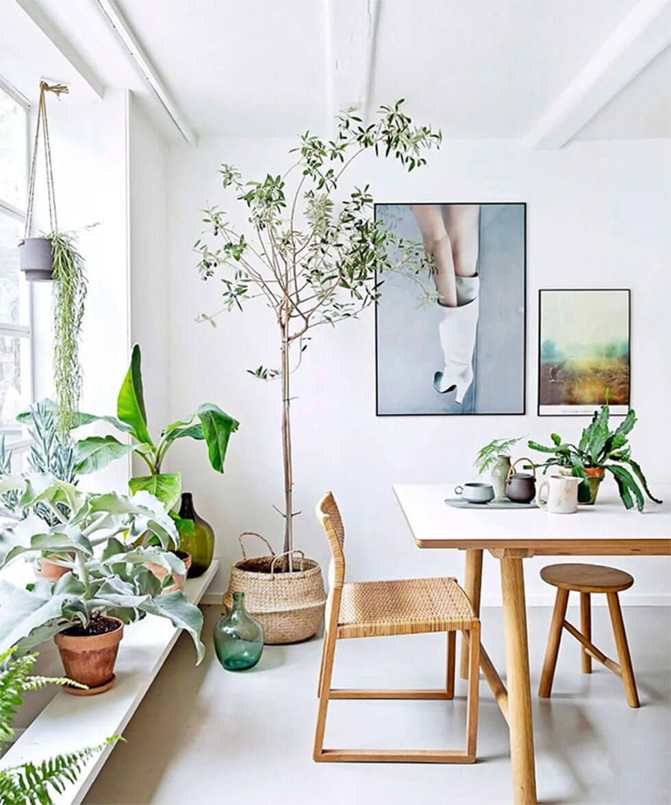All white dining room with lots of indoor plants, wooden furniture and rattan baskets