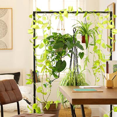 A stylish and refreshing DIY plant room divider