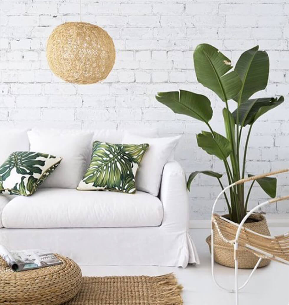 Tropical minimalist living room with indoor plants and rattan accessories